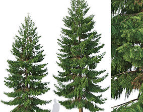 Spruce Nr 5 Two sizes H8-10m Modular branches 3D