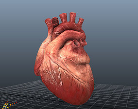 Animated Human Hearts 3D model