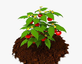 Cartoon Tomato Plant 3D asset