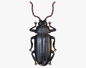 Woodcutter Beetle 3D Model no Rig VR / AR ready