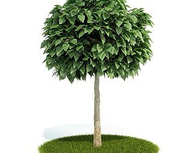 trunk 3D model Mature Tree With All Leaves