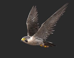 3D model peregrine falcon