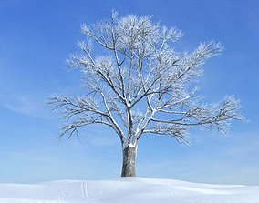 Snow Covered Bare Tree 3D
