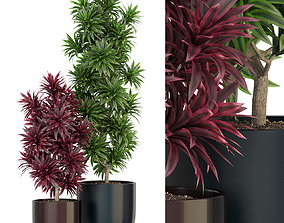 Plants collection 305 3D model