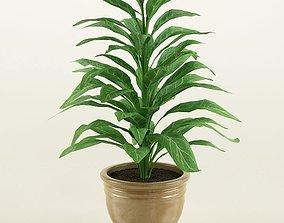 Plant 11 3D model