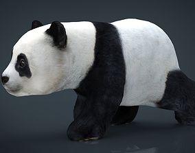 3D model Panda Walking