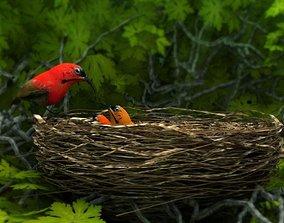 birds weth nest 3D