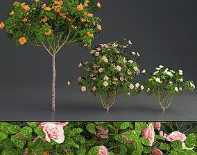 Rose 01 3D model