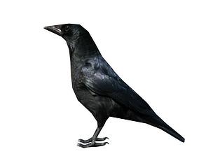 crow lowpoly 3D model