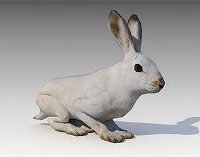 Arctic hare 3D model