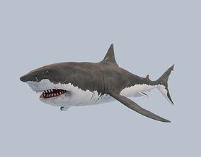 Great White Shark 3D model rigged