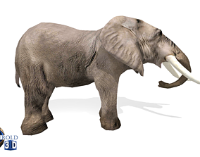 animated Elephant Rigged Animated Lowpoly 3d model