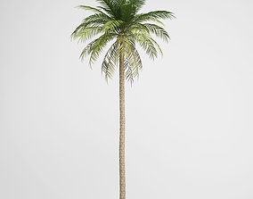 3D model CGAxis Date Palm 03