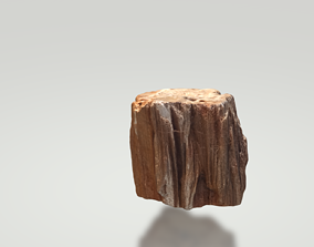 Petrified wood 3D model