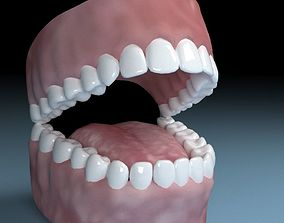 3D Teeth Tongue Mouth Interior