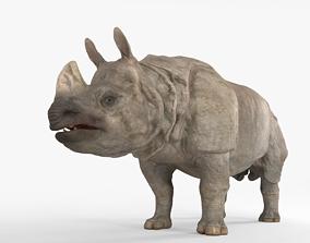 3D asset Indian Rhinoceros
