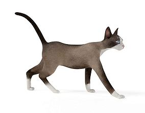 Gray Animal Cat 3D