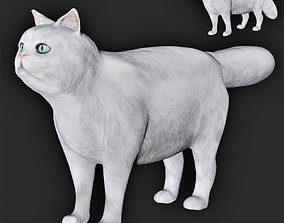 3D asset White Persian Cat