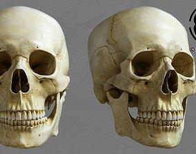 Skull 3D teeth