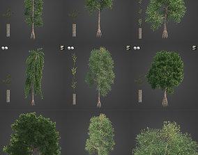 2021 PBR Yellowwood Collection - Podocarpus Falcatus 3D