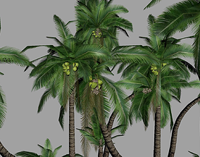 Palm Tree 3D model realtime plant