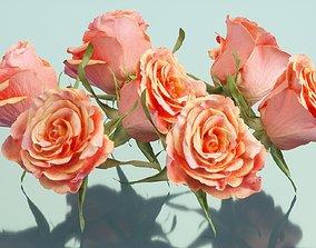 China Chinese Rose Rosa Chinensis 3D asset