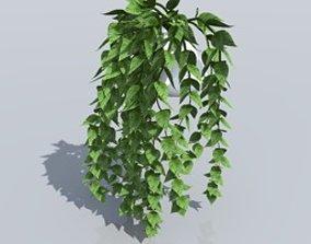 Hedera plant 3D