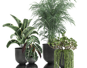 Houseplants in a pot for the interior 879 3D