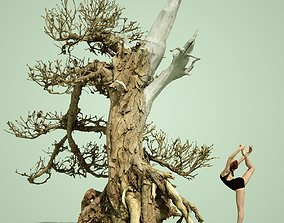 Dead Bonsai Tree 3 3D