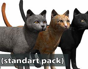 Cat pack 2 3D asset