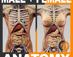 3D Human Anatomy - Body Skeleton and Internal Organs
