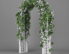Convolvulus white arch 3D