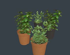 Game Ready Herbs 3D asset