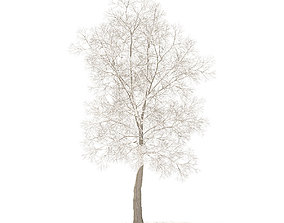 American Elm with Snow 8point5m 3D