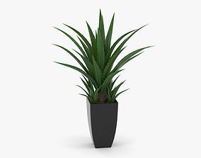 3D model Agave In Decorative Pot