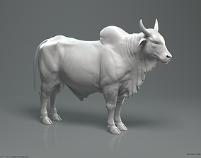 3D model Zebu Bull - Highpoly Sculpture