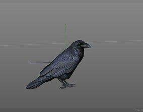 Crow Corbeau 3D model
