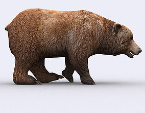 animated 3DRT - Wild Bear