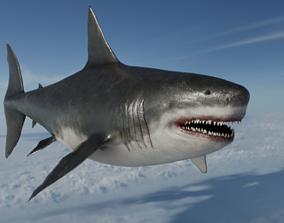 Megalodon Otodus Shark - Prehistoric 3D model 1