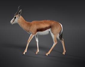 Springbok 3D