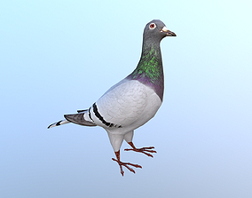 Pigeons Dove 3D model