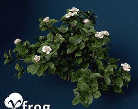 3D model XfrogPlants Gardenia