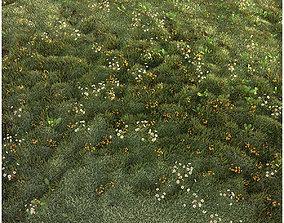3D Grass set chamomile