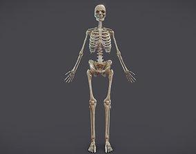 3D model Male Skeletal System Skeleton