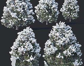 3D model Pinus sylvestris Nr9 H3-6m Winter Five tree set
