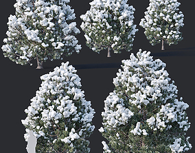 Pinus sylvestris Nr9 H3-6m Winter Five tree 3D model