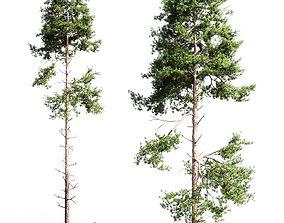nature 3D Scots pine 3