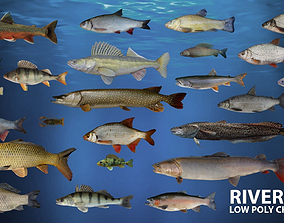 3D asset River fish