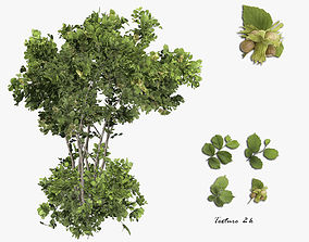 3D model Tree Hazelnut