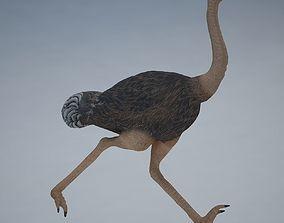 Ostrich 3D model realtime